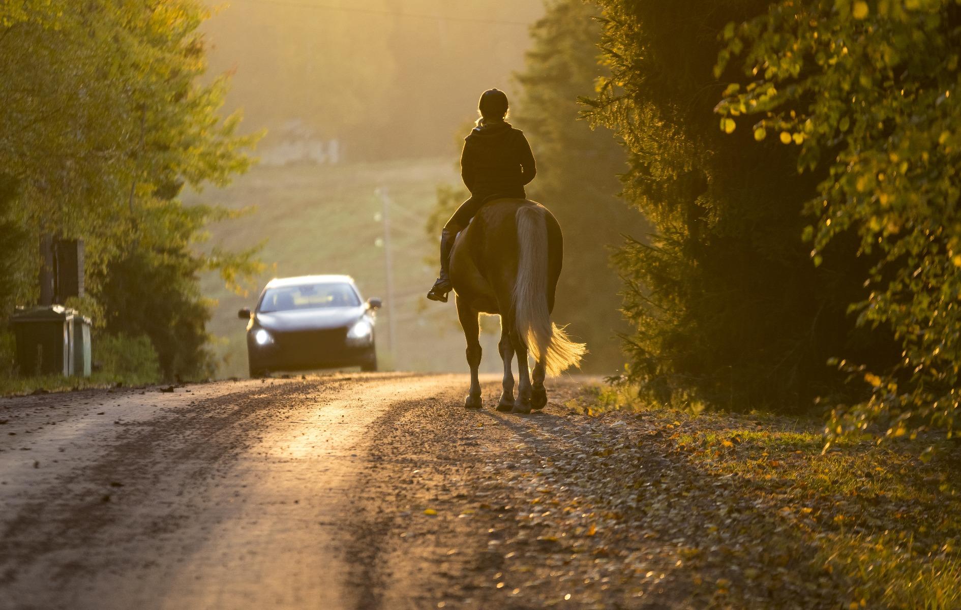 Stübben, Pferd, Reiter, Sattel, Auto, Autofahrer