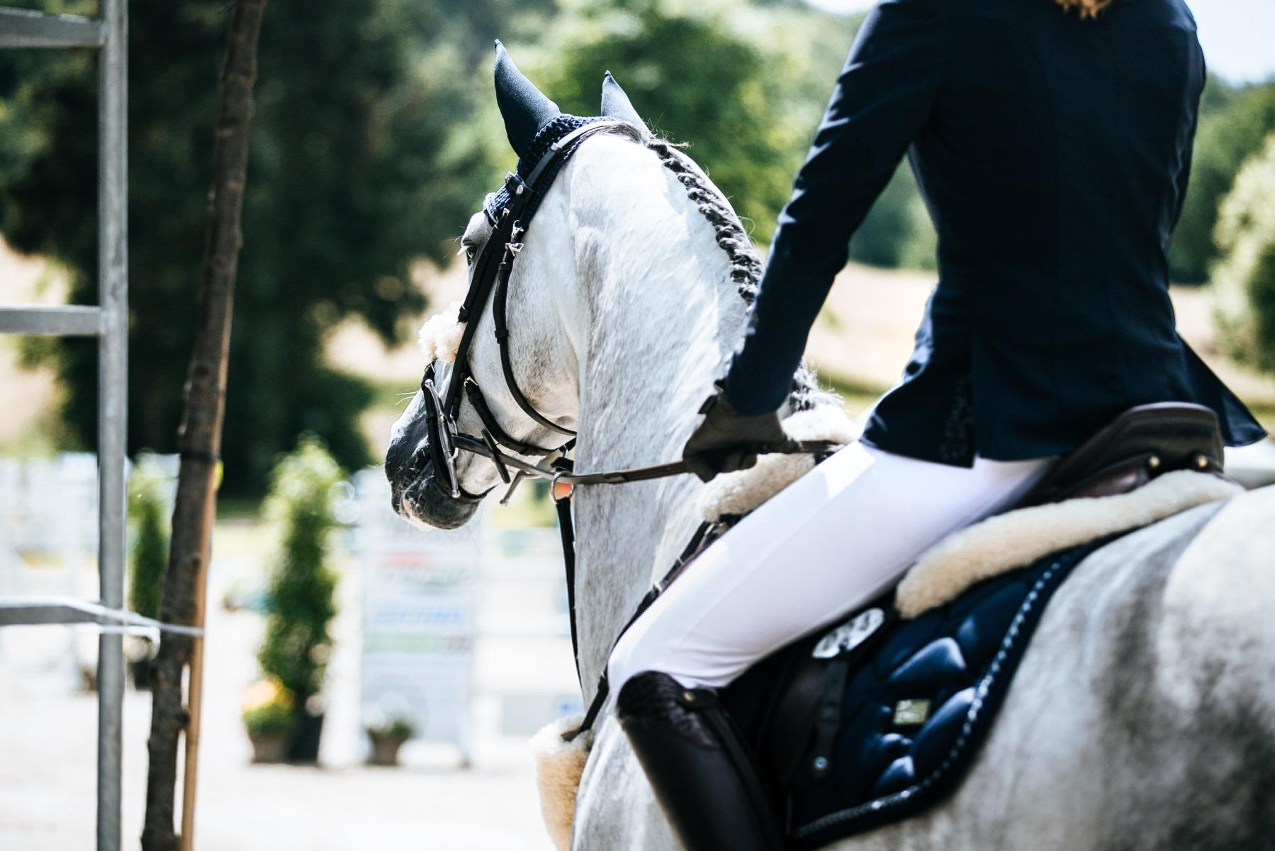 Stübben Reiter, reiten Pferd, Sattel