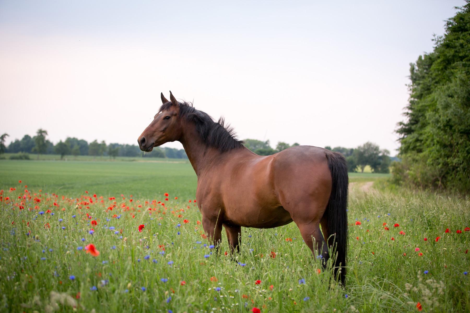 Stübben, Sattel, Sättel, Gläserne Manufaktur, Tasthaare, Pferdesinne, Kempen, Reiter, reiten, Pferd, Pferde, Sinne, Sinnesorgane, Augen,