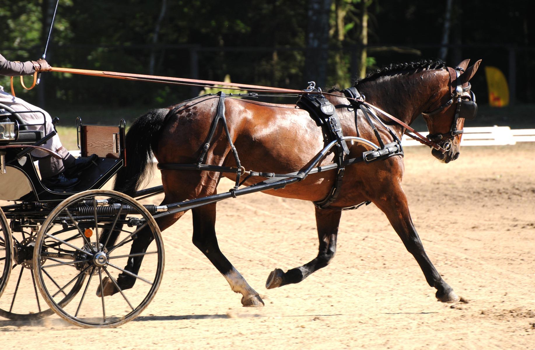 Stübben, Reiter, Pferd, Sattel, Geschirr, Geschirrmacher, reiten