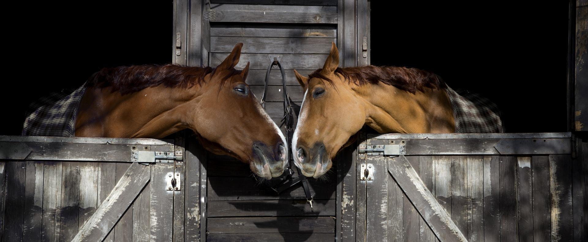 Stübben, Sattel, Sättel, Pferd. Pferde, Stall, Stallklima, Einstreu