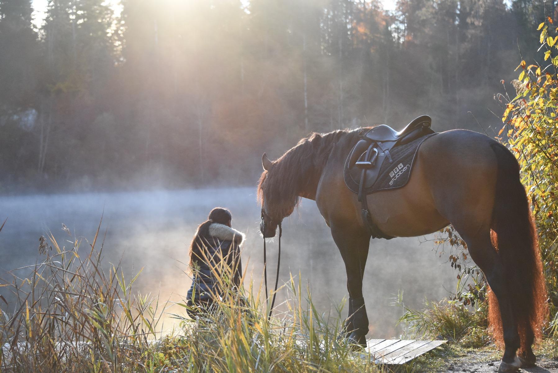 Stübben Reiter, Pferd Sattel, reiten