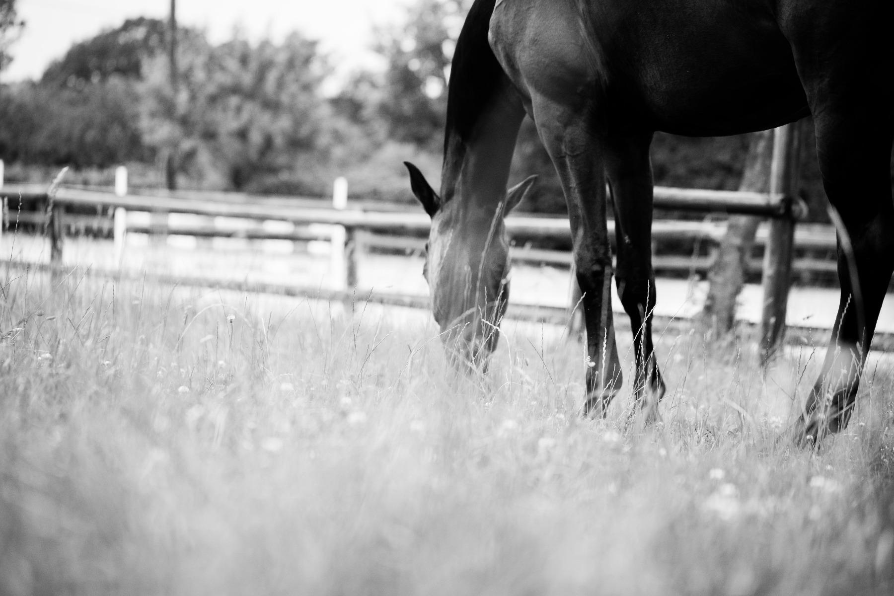 Stübben, Pferd, Reiter, reiten, Sattel, Magen
