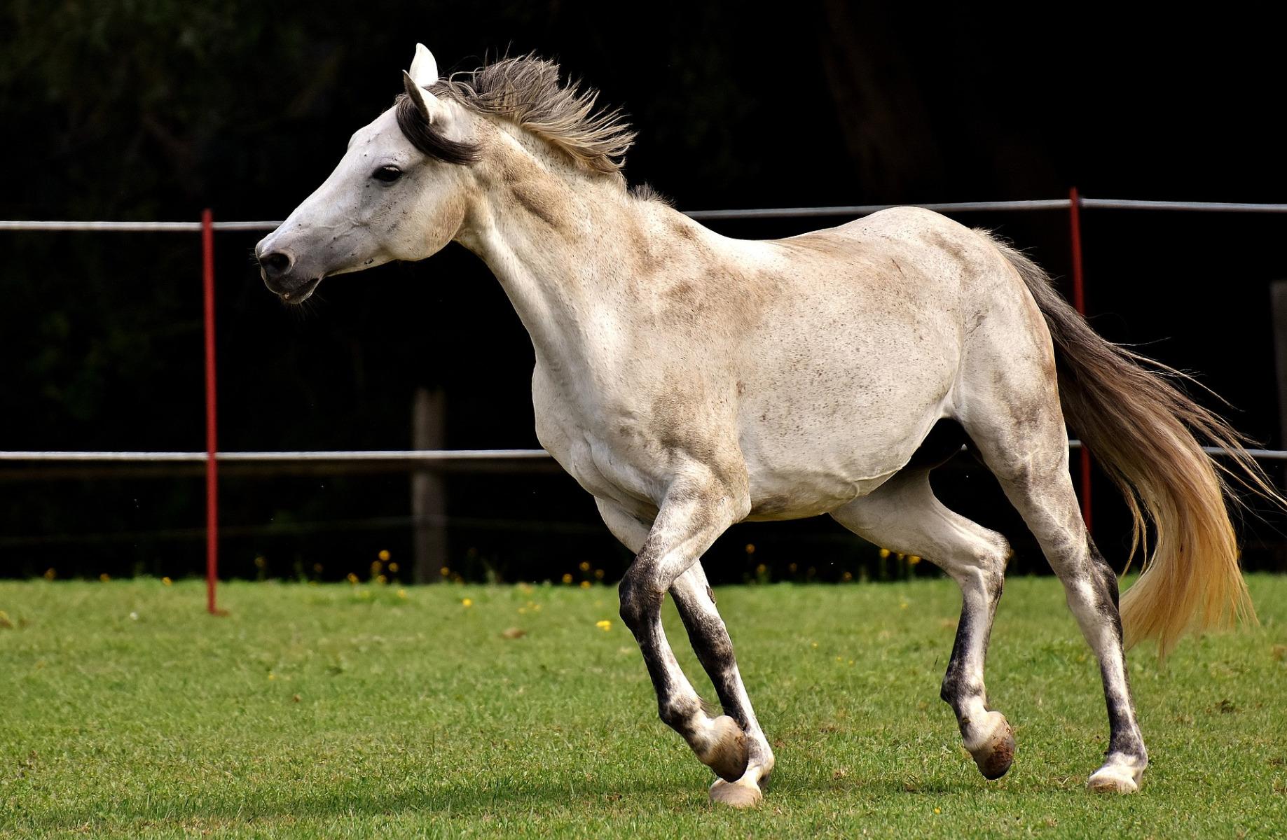 Balance – das Zauberwort für erfolgreiche und gelassene Pferde
