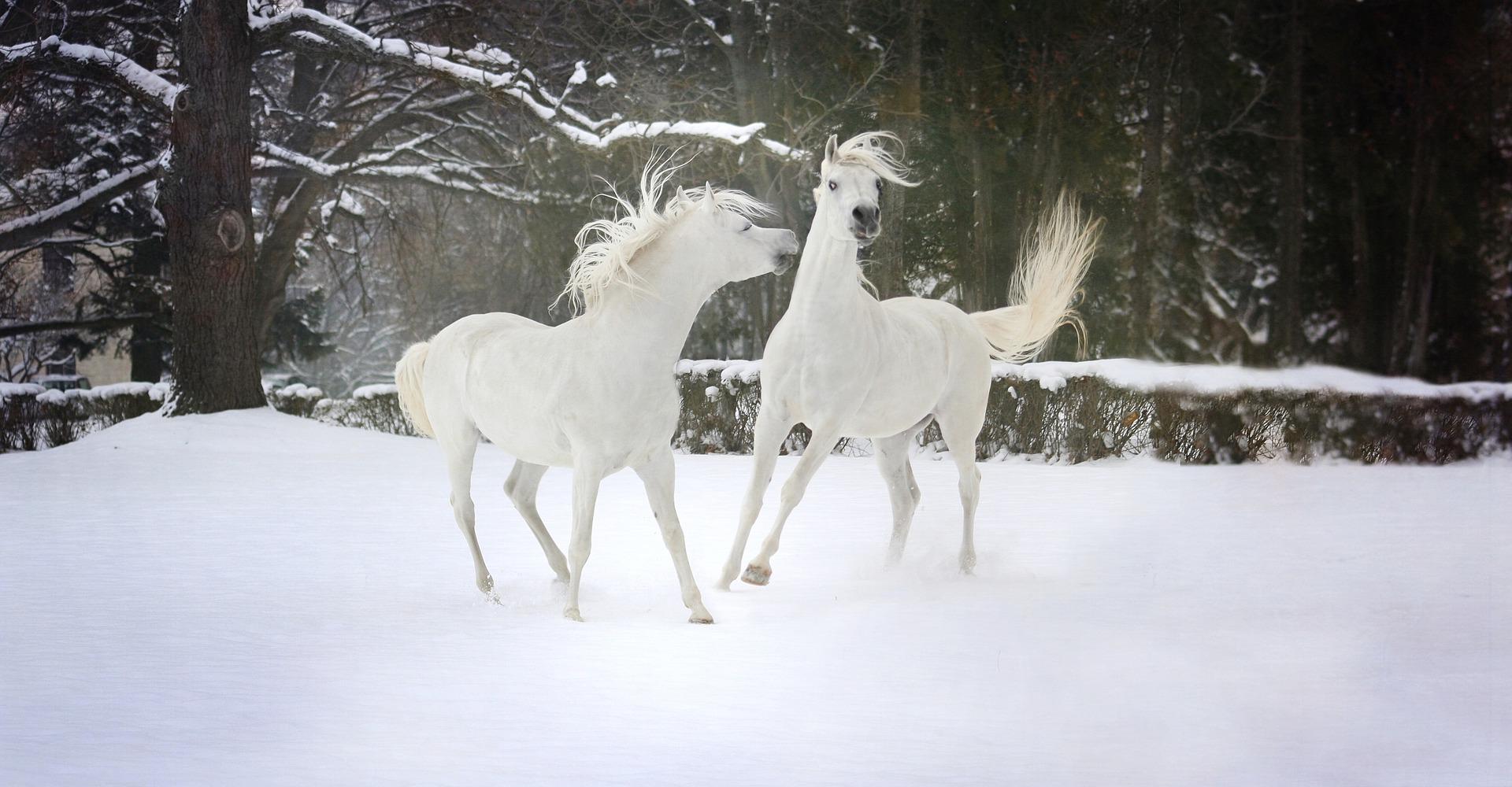 Entgegen der Wahrnehmung der meisten Besitzer junger Pferde ist der psychische Entwicklungsprozess eines Pferdes mit der Gewöhnung an Sattel und Trense im Alter von etwa zwei bis drei Jahren und dem Erlernen erster Zügel-, Schenkel- und Gewichtshilfen bei weitem noch nicht abgeschlossen. Vielmehr beginnt mit Ende des dritten, Anfang des vierten Lebensjahres eine Phase, die in etwa mit der Pubertät Jugendlicher zu vergleichen ist.